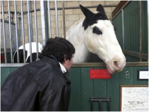 photo of a man looking at a horse and reading its name on a plaque in a stable